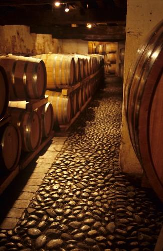 Barrique cellar in Abbazia di Rosazzo, Collio, Friuli