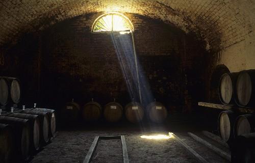Cellar of Vina Errázuriz, Panquehue, Aconcagua Valley, Chile