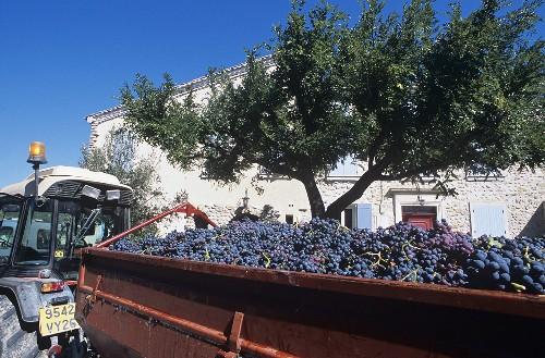 Domaine Jaume grape harvest, Vinsobres, Provence, France