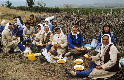 Meal break during grape harvest in Macedonia