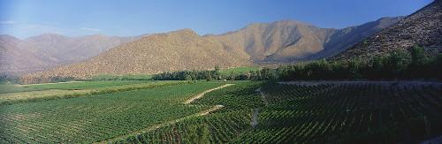 Vineyard of Vina Errazuriz Estate, Aconcagua Valley, Chile