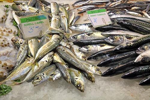 Fresh mackerels on a market stall (Mercat de St. Josep (Boqueria), Las Ramblas, Barcelona, Spain)