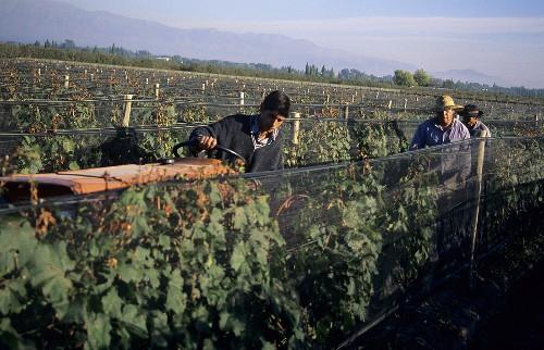 Constructing irrigation channels, Mendoza, Argentina