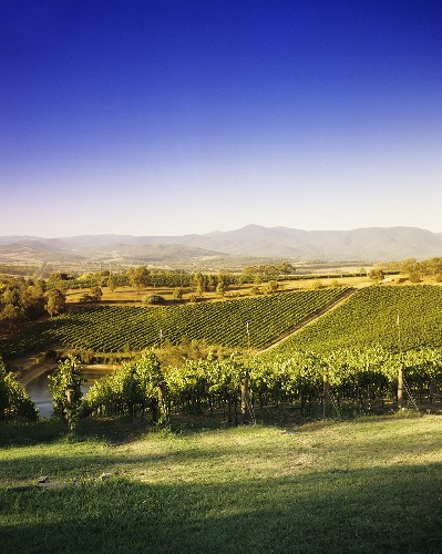 Coldstream Hills Winery, Yarra Valley, Victoria, Australia