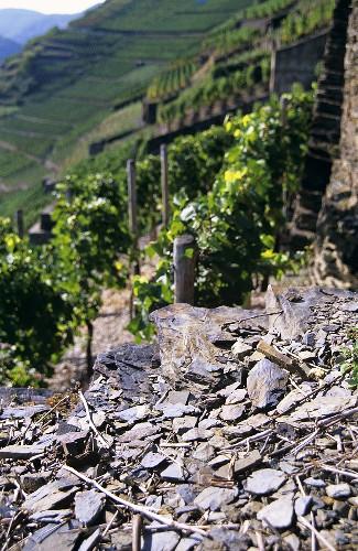 'Altenahrer Eck' Einzellage (single vineyard), Ahr, Germany