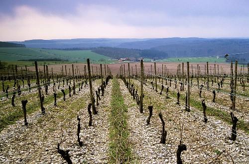 'Reicholzheimer First' Einzellage (single vineyard), Tauberfranken, Baden