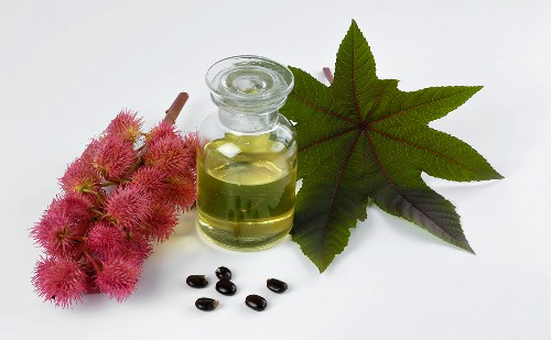 Castor oil plant, oil and seeds