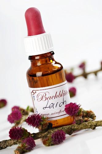Bachblüten-Tinktur: Lärche