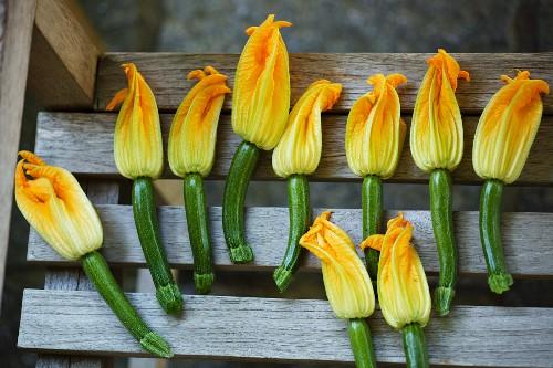Viele Zucchini mit Blüten auf Gartenbank