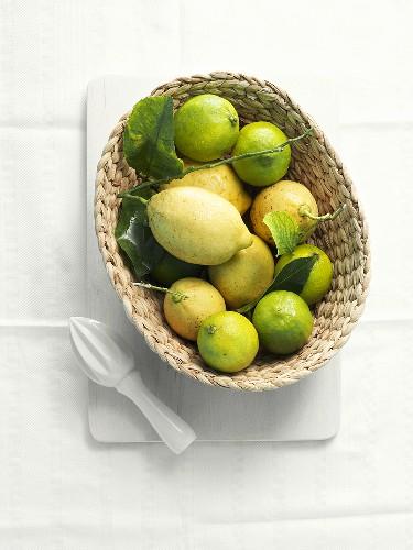 Zitronen und Limetten in einem Körbchen mit Stössel
