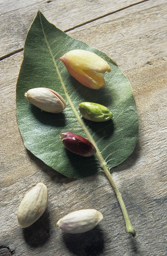 Shelled and unshelled pistachios with a leaf