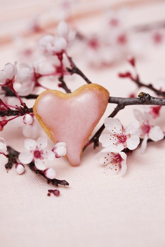 A heart-shaped biscuit with icing sugar against a flowering almond sprig