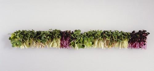 Sprouts: red cabbage, rocket, cress, radish, alfalfa, broccoli