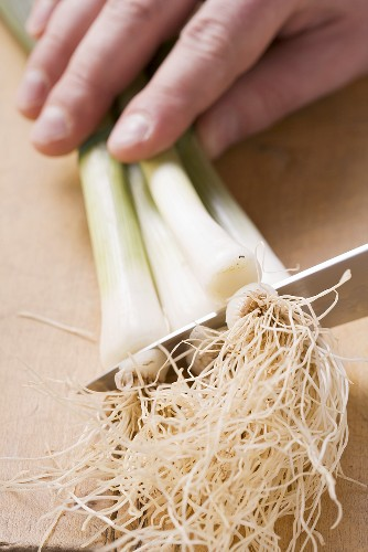 Roots being cut off spring onions