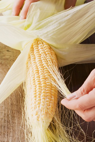 A corn cob being cleaned