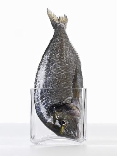 A sea bream in a glass (head first)