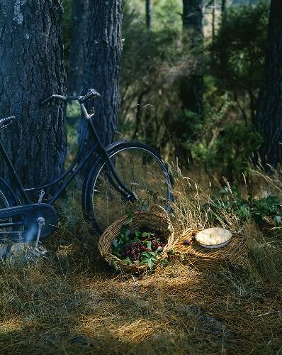 Basket of fresh blackberries, blackberry pie & bicycle by tree