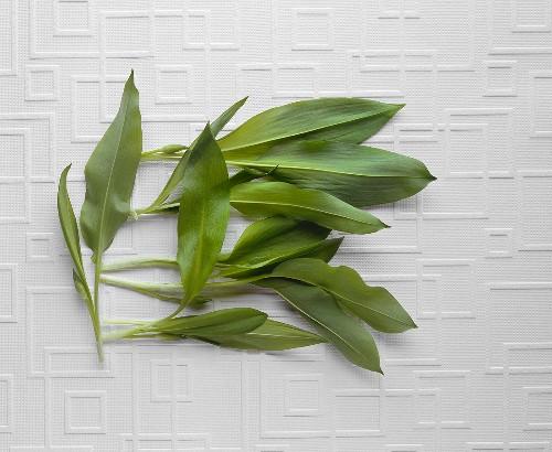 Ramsons (wild garlic) leaves