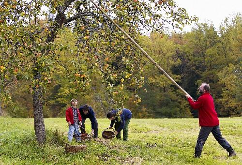 People picking apples