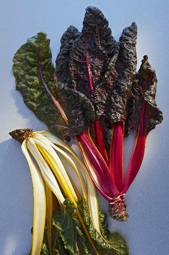 Red and yellow-stem chard