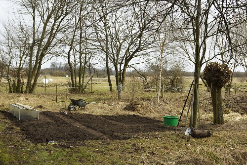 Early beets in a vegetable garden, wheel barrow and garden tools
