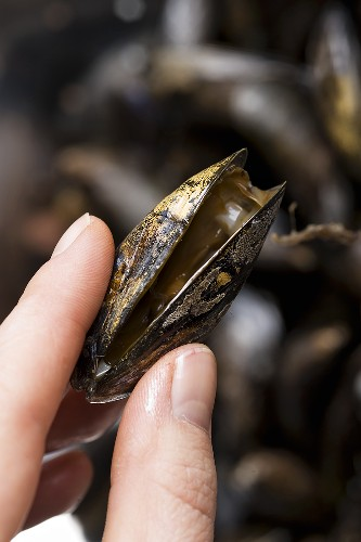 An opened mussel