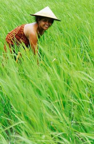 Woman in paddy field, Bali, Indonesia