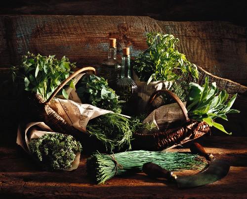 Selection of garden herbs