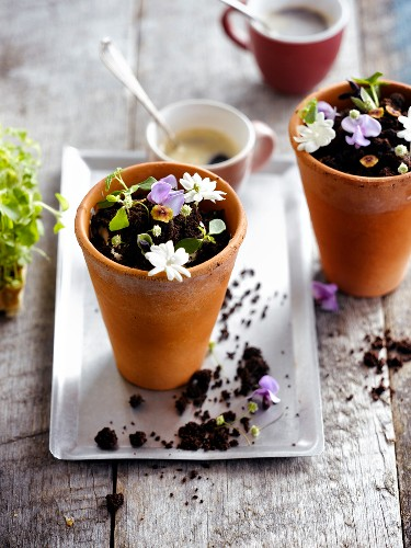 Chocolate and flower dessert served in flower pots