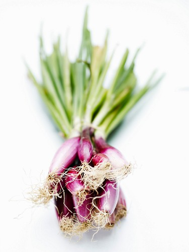 Bunch of shallots on a white background