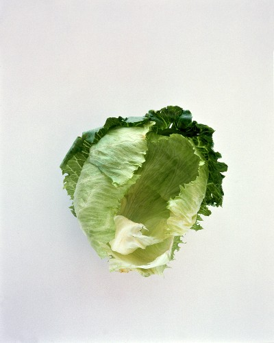 A Fresh Head of Iceberg Lettuce