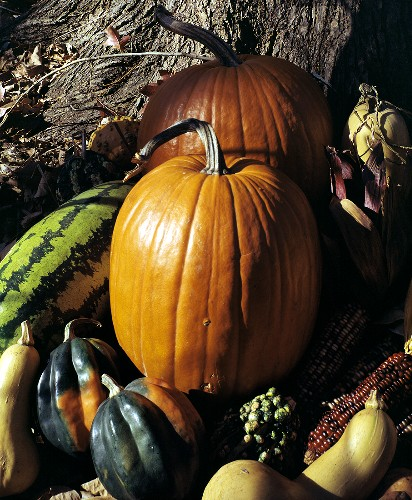 Assorted Squash and Pumpkins Outdoors