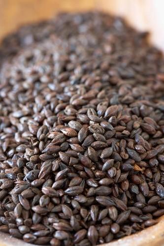Black Patent Barley Beer Malt, Close Up