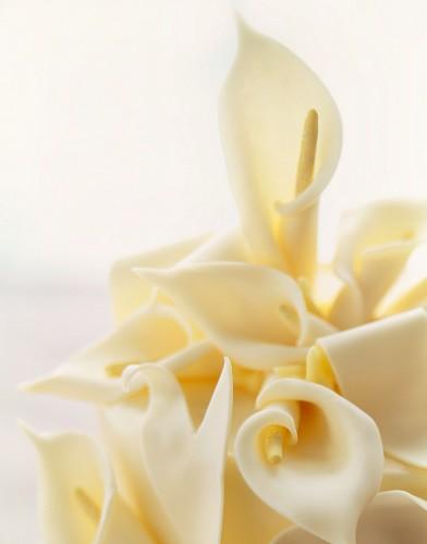 White Chocolate Calla Lilies