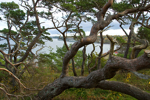 Coastal landscape near Visby, Gotland, Sweden, Scandinavia, Europe