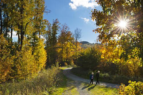 Herbstwald, bei Olsberg, Rothaarsteig, Rothaargebirge, Sauerland, Nordrhein-Westfalen, Deutschland
