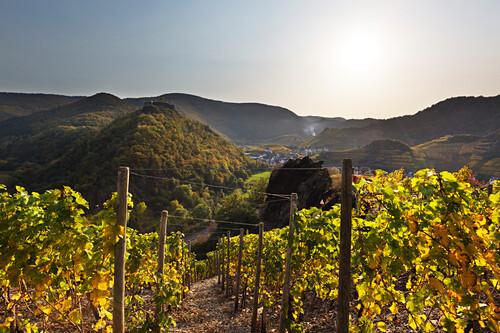 Blick auf die Saffenburg bei Mayschoß, Ahrsteig, Rotweinwanderweg, Ahr, Rheinland-Pfalz, Deutschland