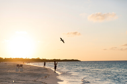 tourists on Cayo Coco beach at sunset, Pelikan, sandy dream beach, turquoise blue sea, swimming, Memories Flamenco Beach Resort, hotel, family travel to Cuba, parental leave, holiday, time-out, adventure, Cayo Coco, Jardines del Rey, Provinz Ciego de Ávil