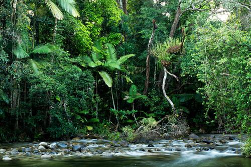 Ein Abschnitt des Mossman Rivers gehört zur Lodge, Silky Oaks Lodge, Queensland, Australien