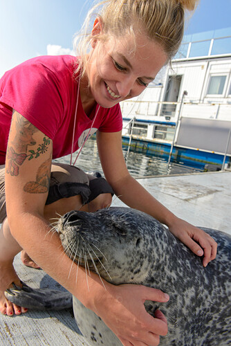 Seehunde Show im Marine Center in Warnemünde, Rostock, Ostseeküste, Mecklenburg-Vorpommern Deutschland