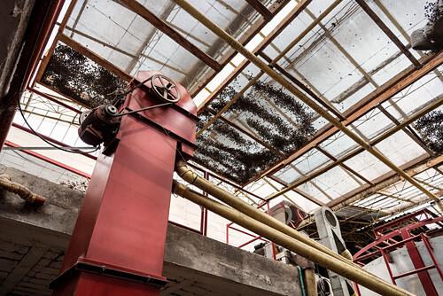 Lufttrocknung der geernteten Kaffeebohnen, Hacienda Venecia bei Manizales, UNESCO Welterbe Kaffee Dreieck (Zona Cafatera), Departmento Caldas, Kolumbien, Südamerika
