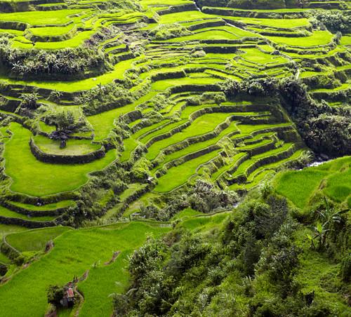 Luftaufnahme von terrassenförmig angelegten Reisfeldern, Banaue, Infugao Province, Philippinen