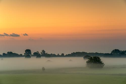 Viehweide im Nebel bei Sonnenaufgang, Sande, Friesland, Niedersachsen, Deutschland, Europa