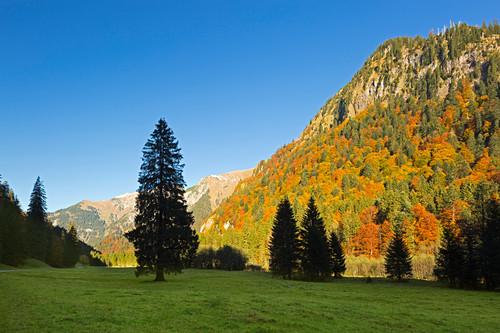 Herbst im Hintersteiner Tal bei Bad Hindelang, Allgäu, Bayern, Deutschland