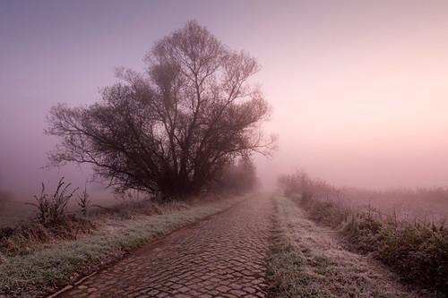 Kopfsteinpflaster, Weide an einem Weg im Nebel, Oderbruch, Brandenburg, Deutschland
