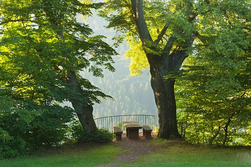 Linden am Aussichtspunkt Elisensitz an der Klause bei Kastel-Staadt, Saar, Rheinland-Pfalz, Deutschland