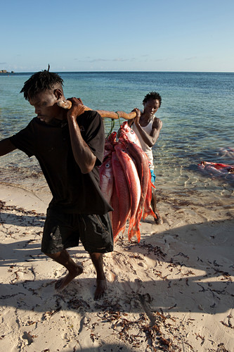Fisherman with fresh catch, Red Snapper, Temple Point Resort, Mida Creek, Watamu, Malindi, Kenya