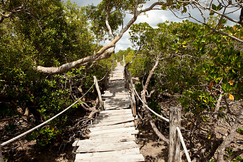 Suspension bridges through the mangroves of Mida Creek, Skywalk, Mida Creek, Watamu, Malindi, Kenya