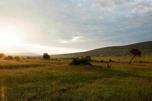 Sunrise in typical landscape of savannah, safari, national park, Masai Mara, Maasai Mara, Serengeti, Kenya