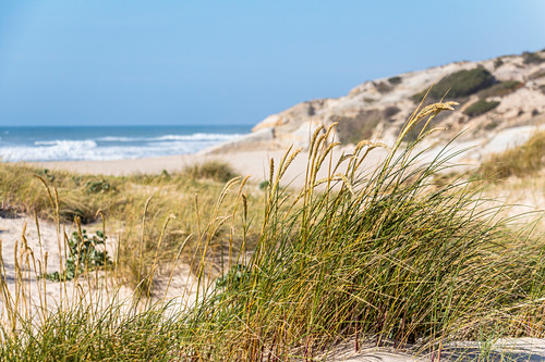 "Dünen am Strand ""Praia d'El Rei, Amoreira, Portugal"